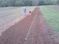 09_first_tomatoes_in_ground