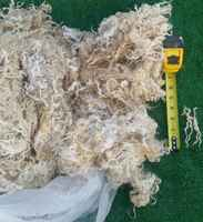 0020_adult_cotswold_ewe_fleece_best